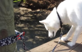 secure dog leash